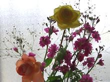 透ける花びら.jpg