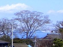 木に隠れた筑波山